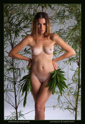 sindy nude bamboo art